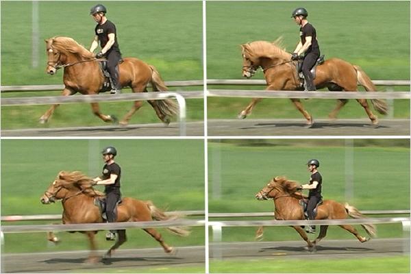 flotte heste med sløjfer